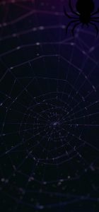 galaxy-s10-cutout-spider-wallpaper