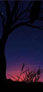 galaxy-s10-punch-hole-cut-out-owl-and-tree-wallpaper